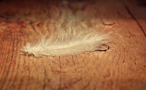 white feather on brown table