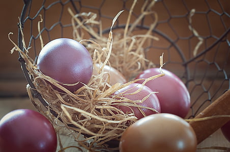 raw eggs in nest