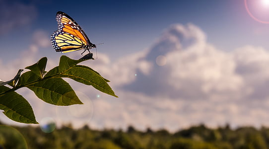 monarch butterfly on green leaf plant