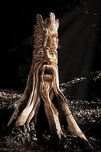 beige wooden tree root