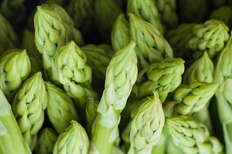 closeup photo of green leaf plants