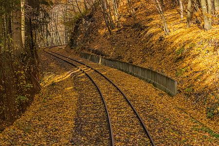 train rail near trees