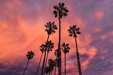 silhouette of palm trees under cloudy sky