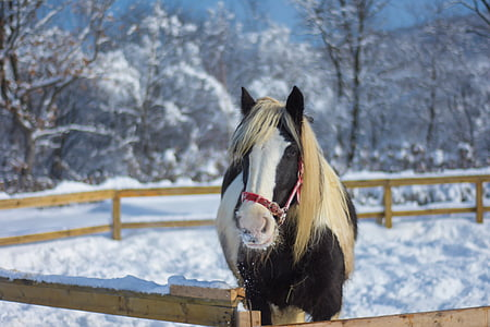 brown and white horse stands near brown wooden fence