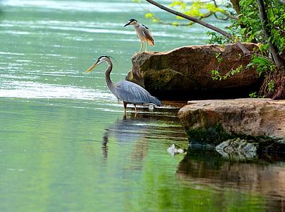 gray egret bird near rock on body of water