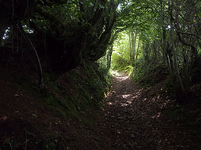 photo of pathway at forest during daytime