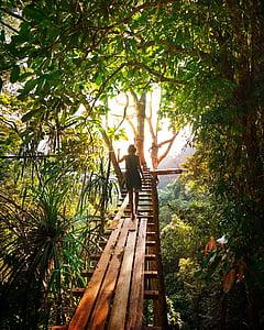 person walking on wooden bridge