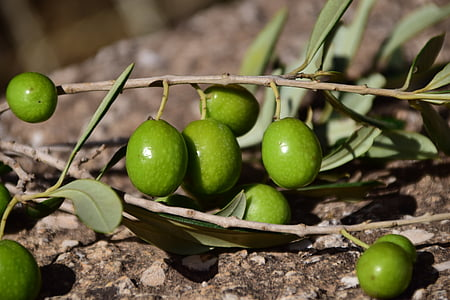 close-up photo of green olives
