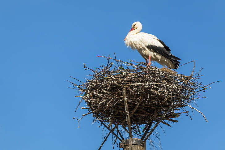 white storks perched on nest during daytime