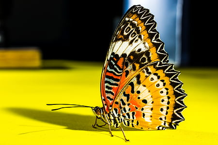 orange and black butterfly in close-up photography