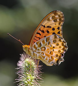 macro photo of brown painted lady butterfly on green flower