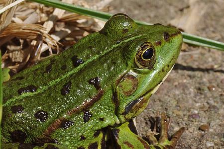 green frog beside grass