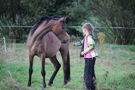 girl playing with brown horse during daytime