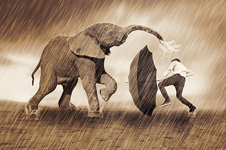 photo of man and elephant playing during the rain