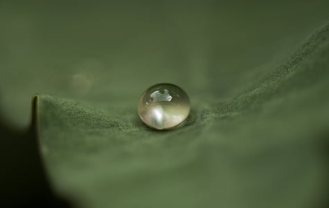 micro photograph of water sprout on leaf