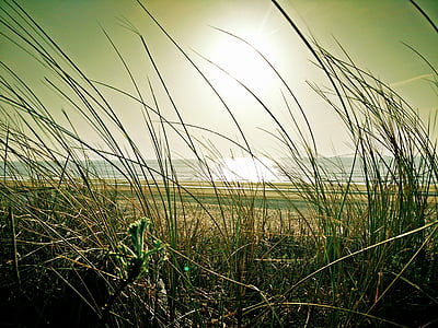 green grasses near sea at daytime