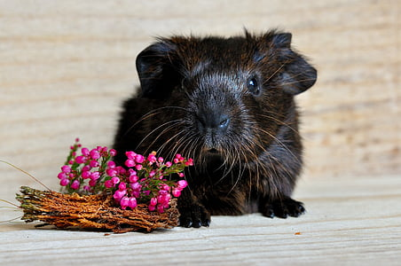 black and brown hamster and flowers on brown wooden surface