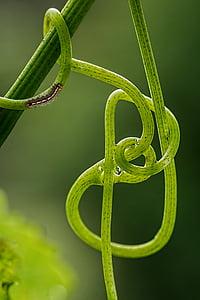 brown moth caterpillar on stem
