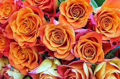 orange rose flowers
