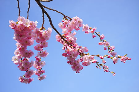 low angle photography of cherry blossom