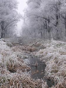 water stream along tress