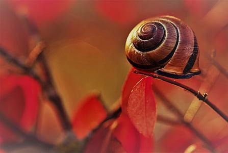 snail in macro shot photography