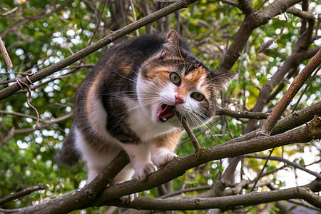 calico cat eating tree branch