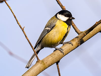 yellow and black bird on brown tree