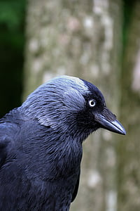 closeup photo of black bird