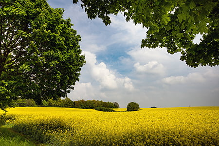 green leaf trees and flower field