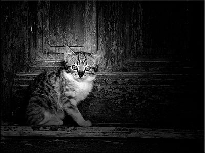 grayscale photography of gray kitten