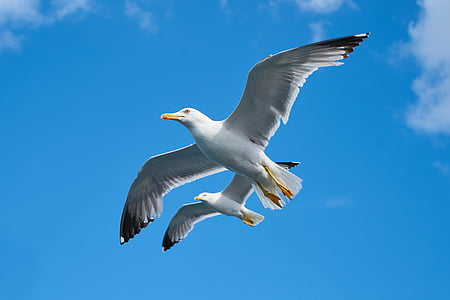 two white birds flying under blue sky