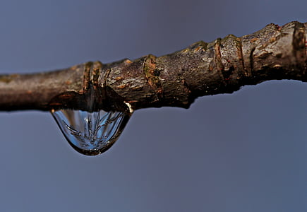 water droplet on the tree trunk photography
