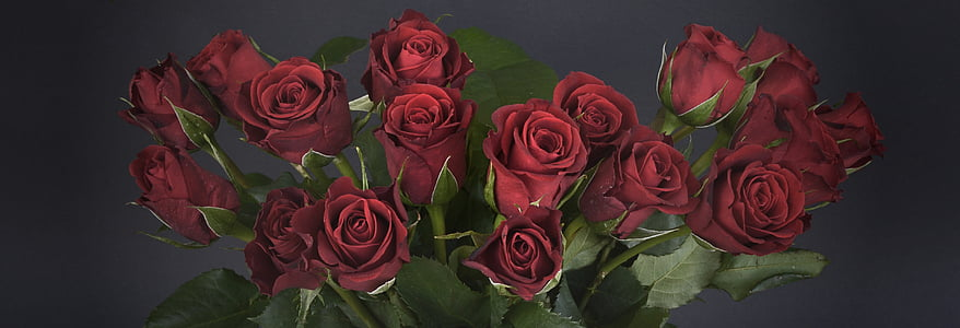 seventeen red roses