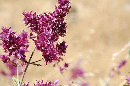 close-up photography of purple petaled flowers