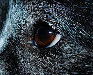 shallow photography of animal's eye