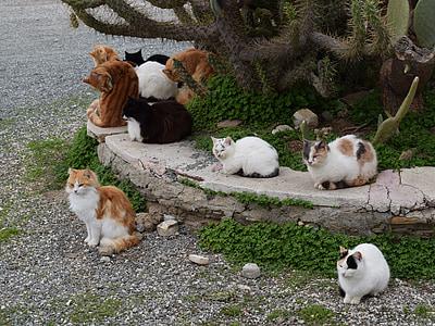 assorted-color cat near cactus tree
