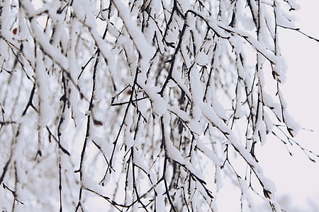 bare tree covered of snow shallow focus photography
