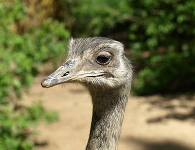 bokeh shot of gray ostrich