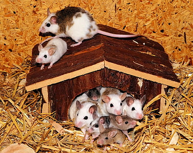 brown-and-white mouses