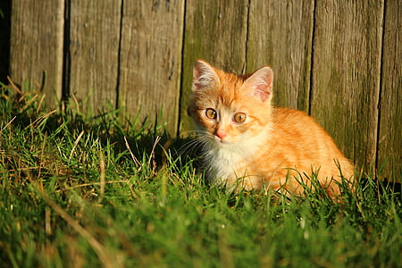 short-fur tan and white kitten on green grass at daytime