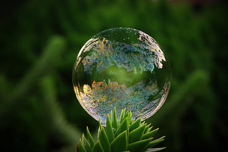 time lapse photography of water drop above green plant