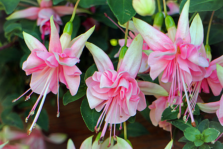 closeup of pink petaled flowers