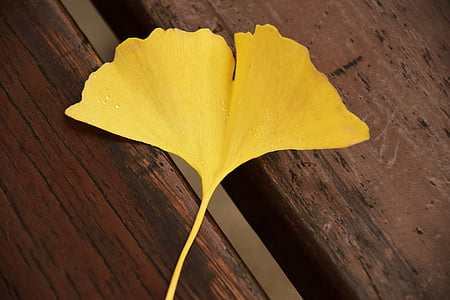 shallow focus of yellow leaf