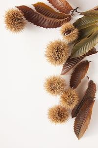 brown round fruits