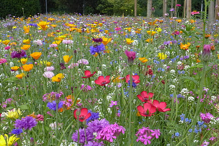 field of assorted color and breed flower field