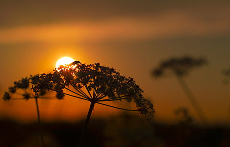 shallow focus photography of flower with sunset in background