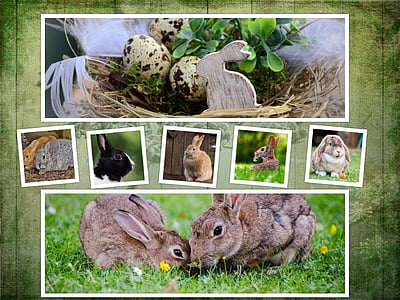 assorted breed of rabbits collage