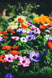 bed of assorted-color petaled flowers