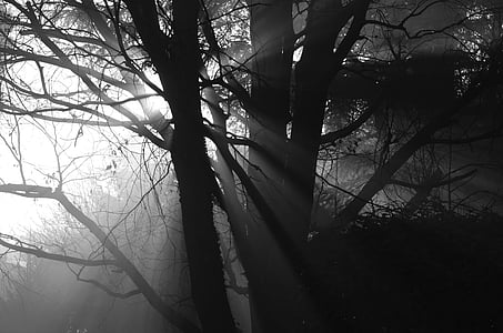 silhouette of tree branch